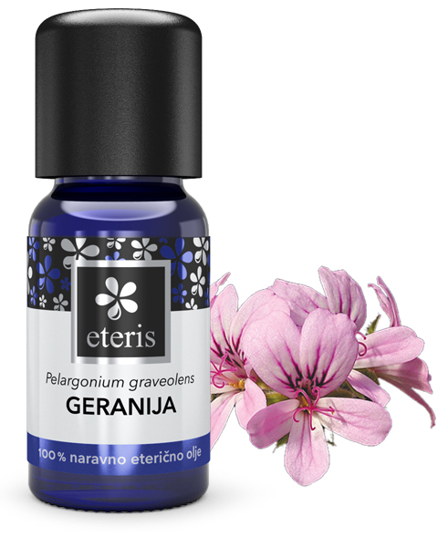 Geranija+rastlina